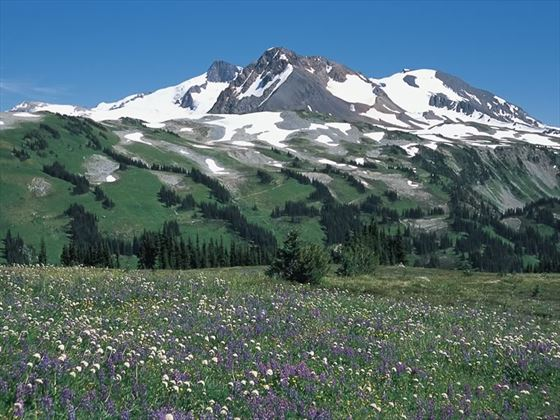 Wildflowers in an alpine meadow at Singing Pass near Whistler