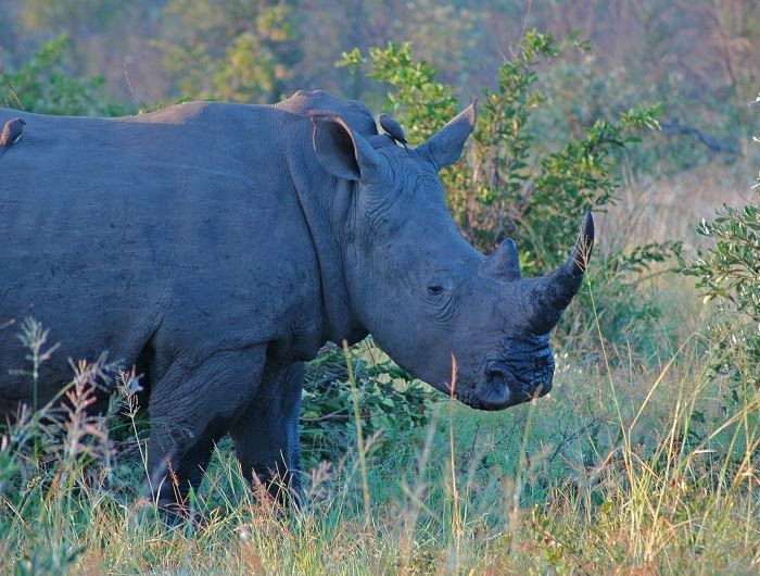 Mike Collins rhino in South Africa