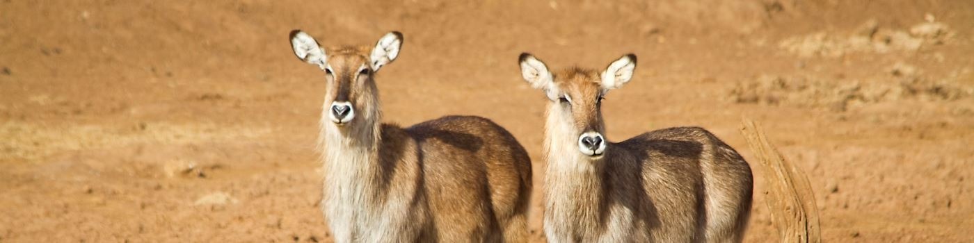 Aberdare NP water bucks - getty