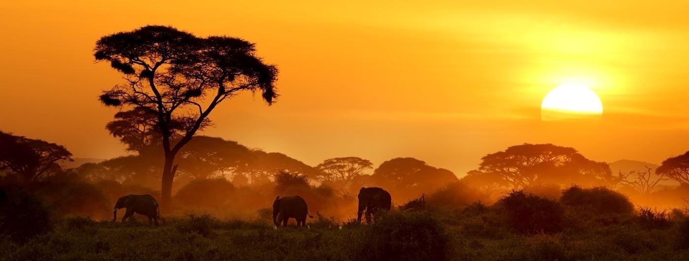 Amboseli National Park - Getty