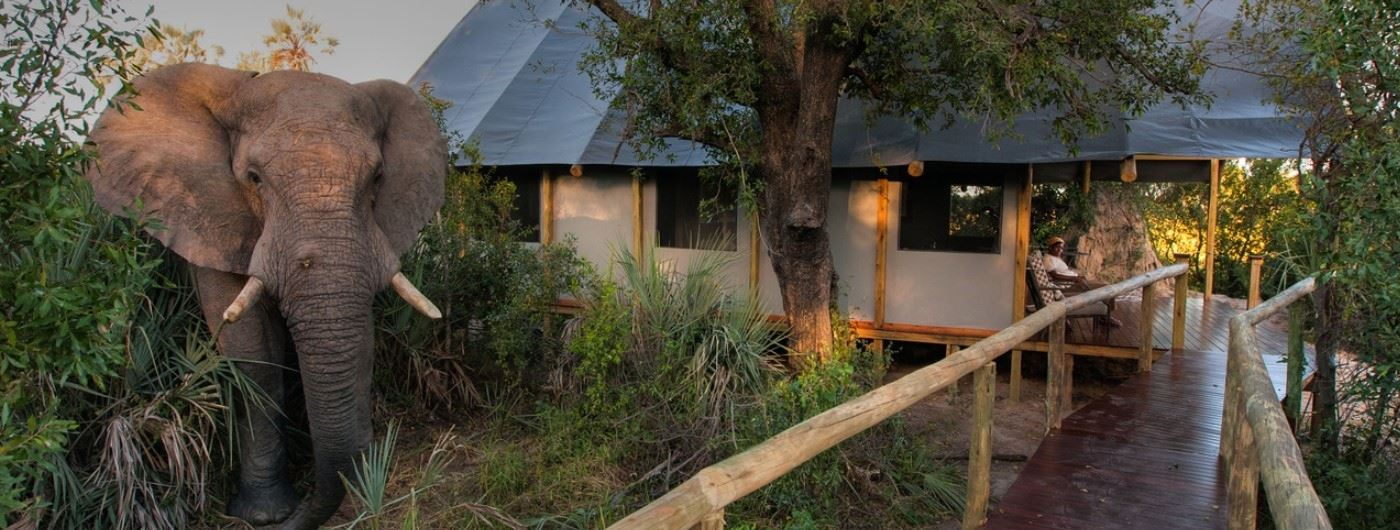 Chitabe Lebida Camp elephant by guest tent