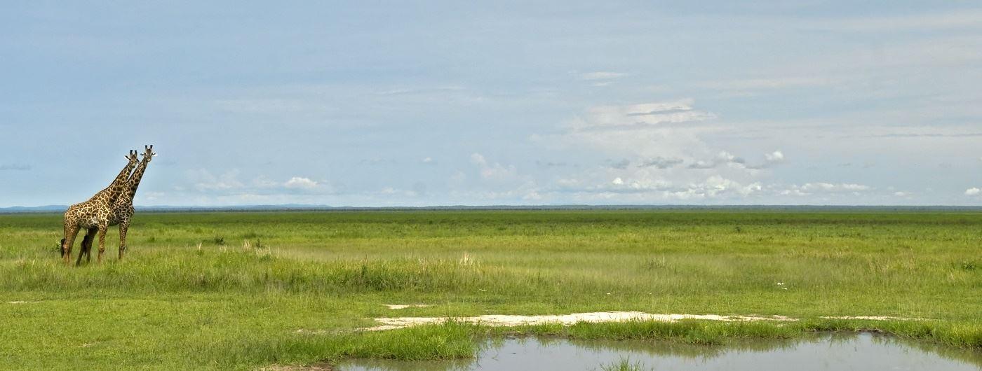 Getty image of Katavi National Park