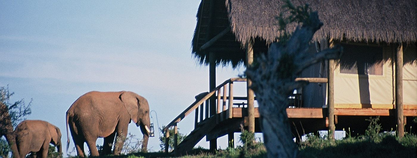 Elephant outside the Luxury Tents