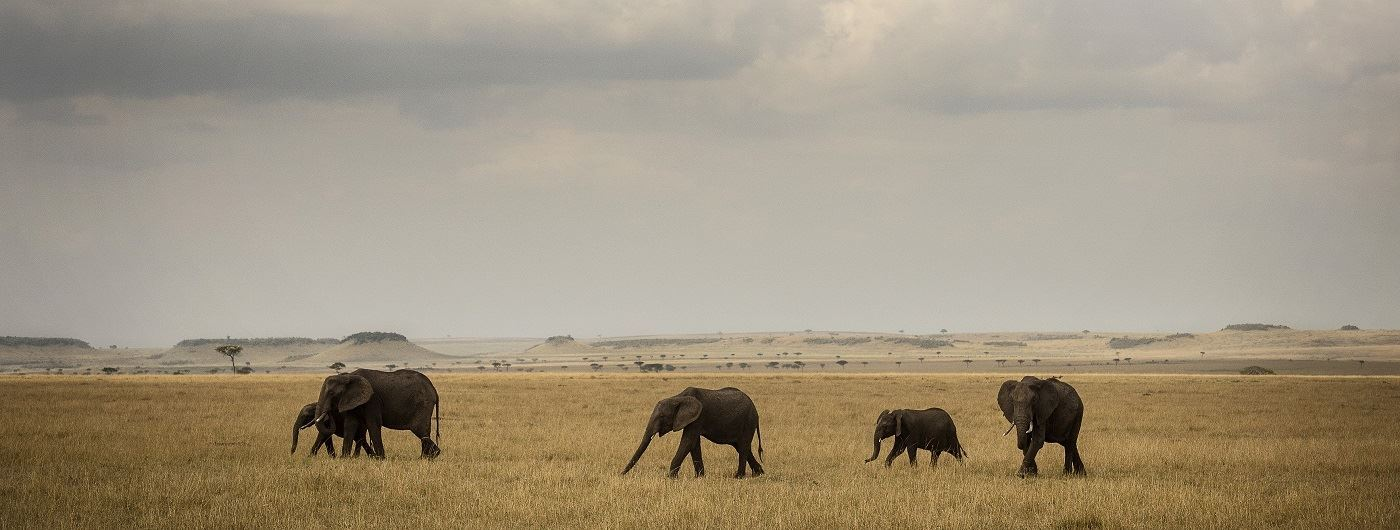 Elephant in Serengeti National Park - Eliza Deacon