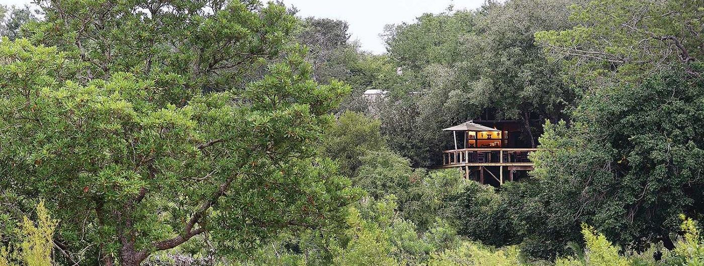 Londolozi - Tree Camp suite hidden in the trees