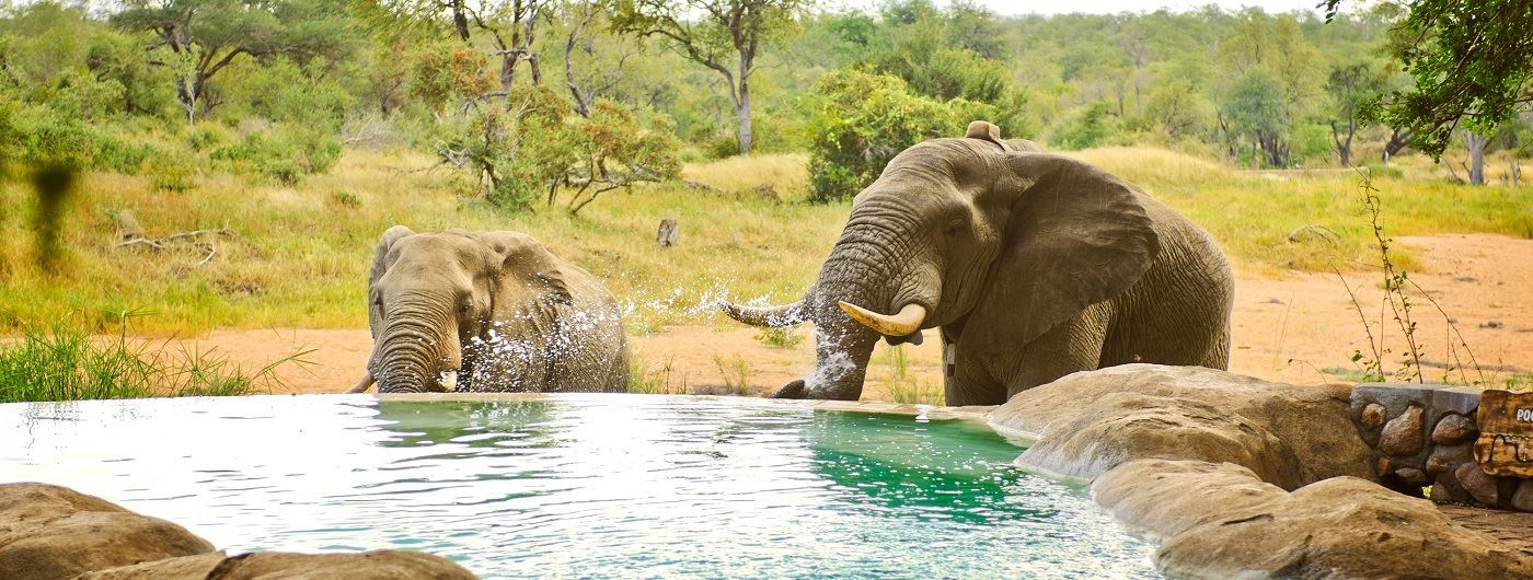 Motswari Game Lodge elephant by swimming pool