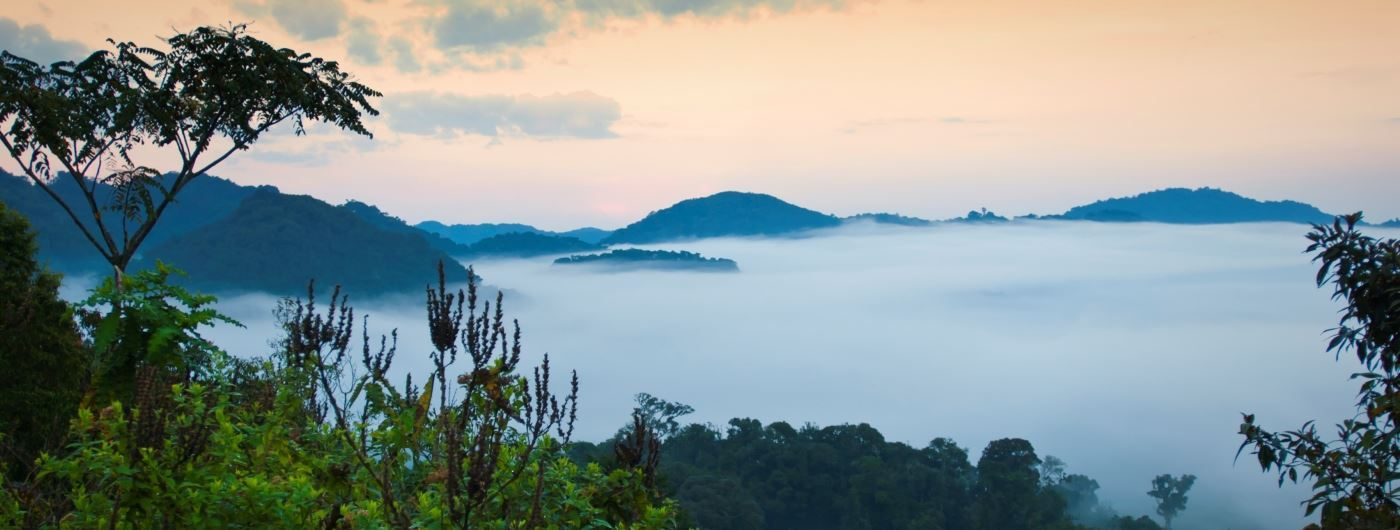 Nyungwe National Park - getty