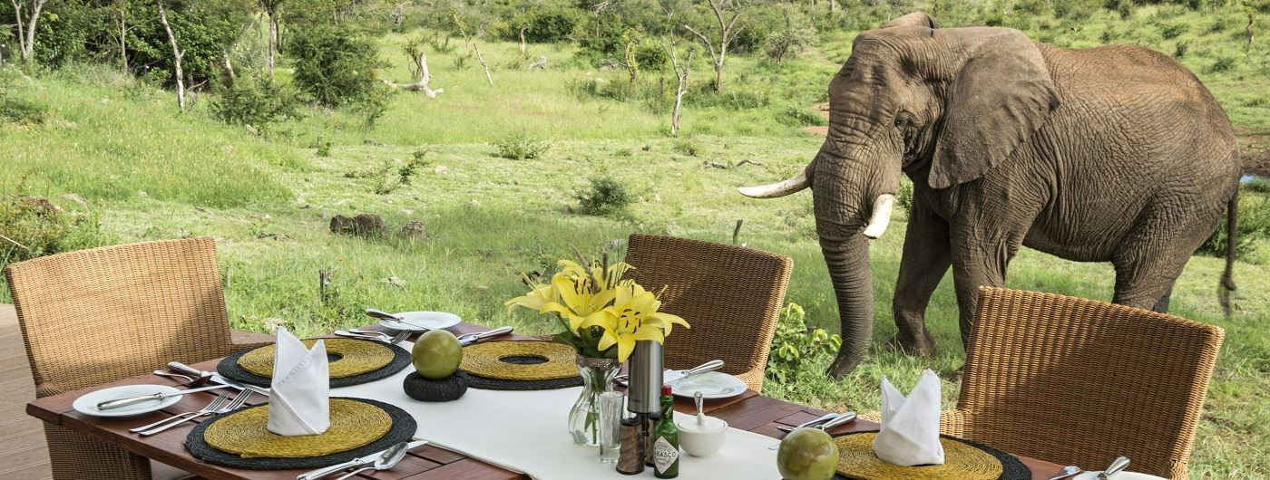 Royal Madikwe elephant by dining deck