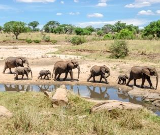 Getty Tarangire waterhole