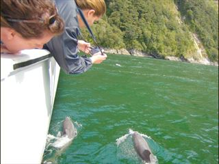 Dolphin-spotting excursions