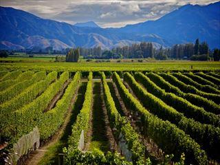 Wine in Marlborough