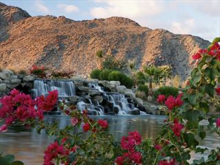 Palm Springs desert oasis