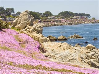 Seascape at Pacific Grove, Monterey