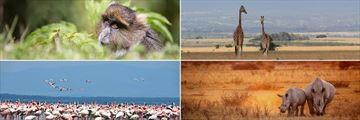 Aberdare & Lake Nakuru wildlife