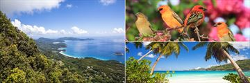 Aerial view, Takamaka Beach and Red Fody birds in Mahe