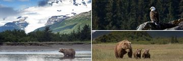 Magnificent wildlife in Alaska
