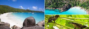 Anse Lazio Beach, Curieuse Coast & Seychelles Black Parrots
