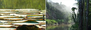 Beautiful scenery in the Peruvian Amazon Rainforest