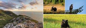 Cabot Trail & Incredible Wildlife Sightings