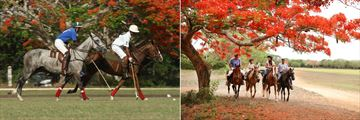 Casa De Campo, Polo and Horseback Riding