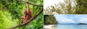 Wildlife and beaches in Borneo, Malaysia