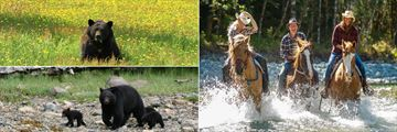 Bears and Horse Riding at Clayoquot Wilderness Resort