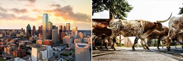 Dallas Cityscape & Texas Longhorns crossing in Fort Worth