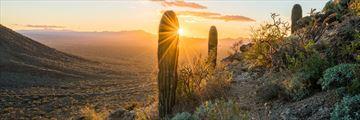 Sagauro Desert near Tucson