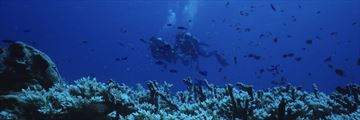 Divers exploring Great Barrier Reef