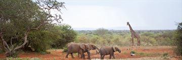Kenya waterhole