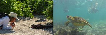 Iguanas and turtles in Galapagos