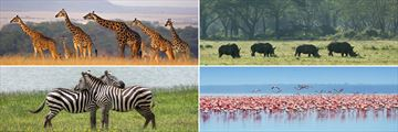 Wonderful widlife in the Masai Mara