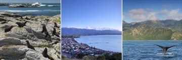 Kaikoura wildlife & coastal scenery