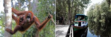 The Kalimantan Orangutan River Tour