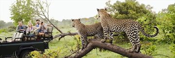 Game Drive, Kruger National Park