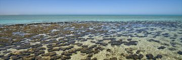 Living rocks, Shark Bay, Ningaloo Reef