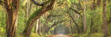 Country roads in South Carolina