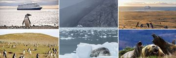 Incredible Sightings of Magdalena Penguins & Elephant Seals