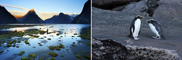 Milford Sound Scenery and Penguin Sightings
