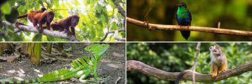 Gorgeous wildlife in Costa Rica