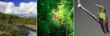 Monte Verde River, Canopy Tour & Birdlife
