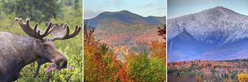 Wildlife & Scenery in the White Mountains & Mount Washington