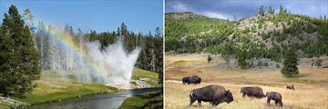 Yellowstone National Park and Oregon
