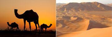 Desert landscapes, Oman