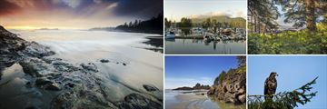 Pacific Rim National Park, Ucluelet Harbour & Eagle Sighting