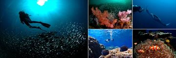 Pimalai Resort & Spa, Koh Lanta, Scuba Diving, Reef, Manta Ray, Clown Fish and Snorkeling