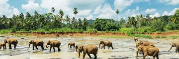 Pinnawala Elephant Orphanage Sri Lanka