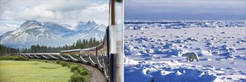 Rocky Mountaineer & Polar Bear in Churchill, Canada