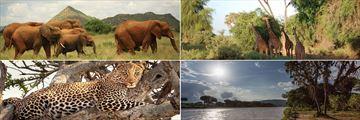 Samburu National Reserve wildlife & landscapes
