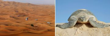 4x4 on the Sand Dunes & Ras Al Jinz turtle